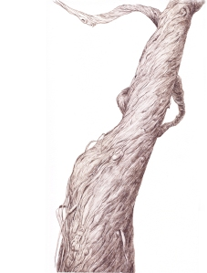 "Guno Park, ""Natural Posture"", walnut ink on paper, 15 x 11 inches, 2012"